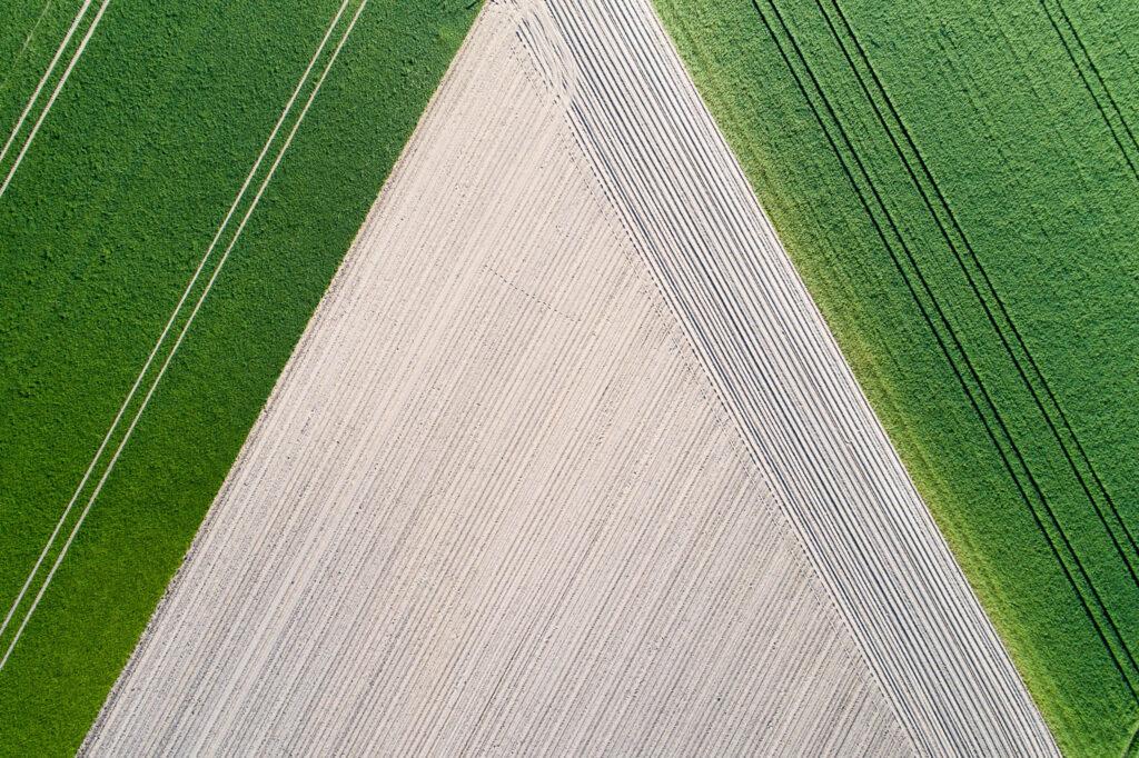 Getreidefeld bei Egestorf, Niedersachsen