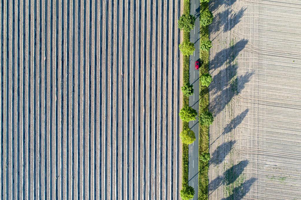 Spargelanbau bei Buchholz an der Aller, Niedersachsen